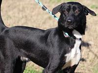 GOOBER's story MEET GOOBER! A 1-2 year old, male,