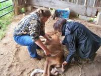 Mustang Alley Horse Rescue is in desperate need of