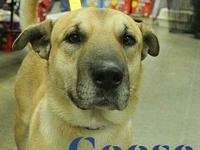 Goose's story  This smooth looking handsome boy is