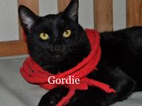Gordie is a 6-month old black kitty who is very
