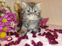 (AD UPDATED 10/22/13) PRECIOUS GEMS PERSIANS HAS 2, 12