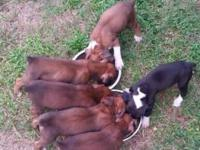 I have 6 gorgeous boxer puppies for sale..they are 5