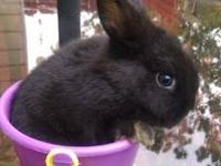 Hi, I have three beautiful NewZealand blacks bunnies.