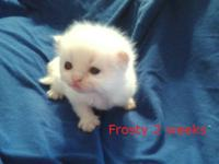 Frosty is a striking little guy that is just adorable.