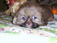I have 2 CKC signed up Shih-Tzu left. They are crate