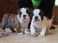 These lovely pups are up for grabs! They are AKC signed