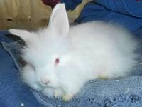 I have 5 angora babies still available. They are a mix
