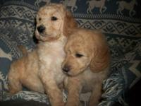 Young puppies are here, least likely generation of