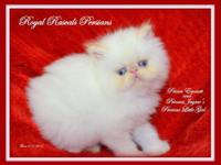 Sweet, docile, affectionate, beautiful little girl