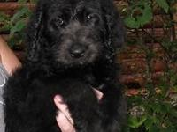 We have 4 stunning puppies. You can go to our site and