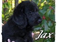 We have 8 lovely young puppies. They are black, but the