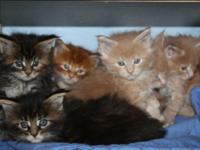 Hi I have 7 sensational 8 week old kittycats. They are