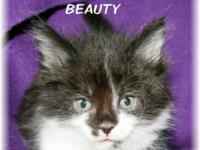 Meet Beauty! She is looking for his forever home... She