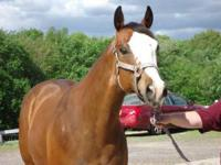 *Absolutely gorgeous* Breeding Stock Paint Mare. 7