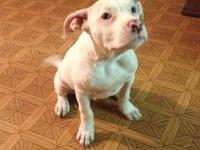I currently have a gorgeous white pitbull puppy that is