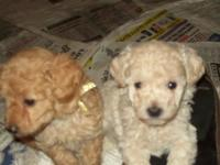 I have a litter of gorgeous male and female puppies for