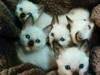 Kittys go with there shot wormed health certificate i