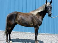 Jennifer's Mountain Horse Farm has been breeding,