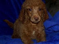 Payton - dark red boy Ready to go home! Perfect family
