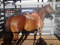 I am selling my gorgeous registered quarter horse mare