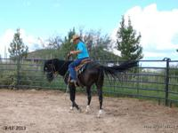 We can help! Horse training, starting, and problem