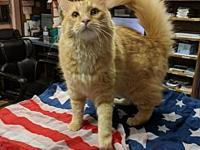 Gouda's story Gouda is a front declawed, neutered male.