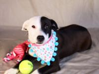 Grace is a Border Collie mix who is about 4 months old.