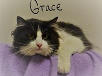 Grace's story Grace is sweet and graceful and looking