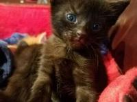 Grace's story Available soon - Four kittens were