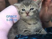 Grace's story Grace is a grey kitten that was found