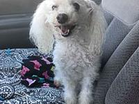 Grace's story Grace is a 5-7 year old maltipoo. She is