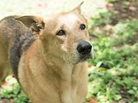 Grace's story Grace is an intelligent and loyal dog.