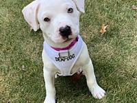 My story This sweet baby came to Bosley's Place rescue