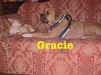 Gracie's story Gracie is a wonderful dog. She has came