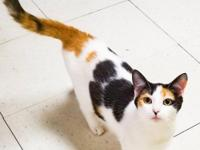 Sweet and equally beautiful calico daughter is Gracie.