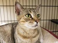 GRACIE's story GRACIE IS AN EXTREMELY AFFECTIONATE 2