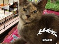 "Gracie's story This little girl is a ""Kitten with"