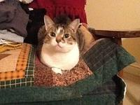 Gracie's story Gracie is a sweet and affectionate (in