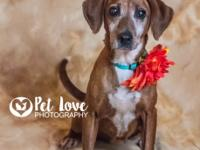 Gracie is a beautiful 9 year old hound mix.  She is