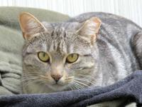 Gracie-Lu is a very sweet 2-3-year-old spayed female.