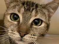 My story I am a playful kitten who loves to