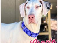 Gracie is a 2 year old, female, Great Dane. Shes dog
