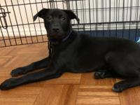 Foster Update: Graciella is an energetic, friendly