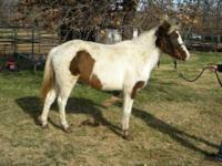 Grade - A135603 - Small - Adult - Female - Horse
