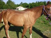 Grade - Ginger - Large - Senior - Female - Horse Ginger