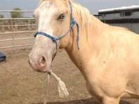 Grade - Moontana - Medium - Young - Male - Horse