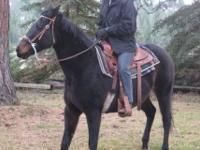 Grade - Nugget - Medium - Adult - Female - Horse Nugget