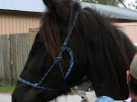 Grade - Samara - Medium - Young - Female - Horse SAMARA