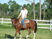 Grade - Sugar - Large - Adult - Female - Horse
