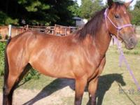 Grade - Violet - Large - Adult - Female - Horse Violet